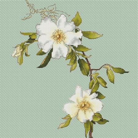 Авторская схема для вышивки крестом Екатерины Волковой - Клематис