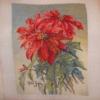 Отшив схемы для вышивки крестом Екатерины Волковой - Пуансетия