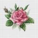 Авторская схема для вышивки крестом Екатерины Волковой - Роза