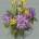 Авторская схема для вышивки крестом Екатерины Волковой - Гортензии и нарциссы